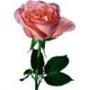 Красивая картинка для аватарки из категории Цветы #681