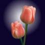 Оригинальная ава из категории Цветы #682