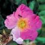 Оригинальная ава из категории Цветы #686