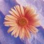 Крутая автрака из категории Цветы #687