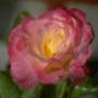 Красивая автрака из категории Цветы #689