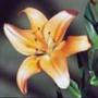 Крута ава из категории Квіти #690