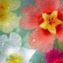 Бесплатная автрака из категории Цветы #693