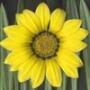 Оригинальная автрака из категории Цветы #694
