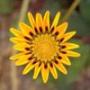 Крутая картинка для аватарки из категории Цветы #698