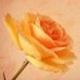 Крутая ава из категории Цветы #703
