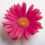 Бесплатная ава из категории Цветы #705