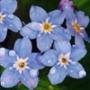 Бесплатная автрака из категории Цветы #706