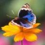 Оригинальная картинка для аватарки из категории Цветы #708