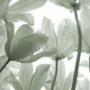 Крутая картинка для аватарки из категории Цветы #710