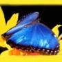 Бесплатная ава из категории Цветы #712