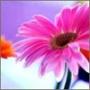 Прикольная автрака из категории Цветы #720