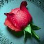 Красивая ава из категории Цветы #722