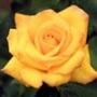 Прикольная ава из категории Цветы #727