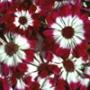 Красивая ава из категории Цветы #729