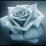 Крутая картинка для аватарки из категории Цветы #732