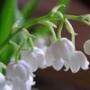 Оригинальная ава из категории Цветы #734