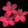 Крутая картинка для аватарки из категории Цветы #746