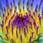 Крутая ава из категории Цветы #771