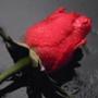 Прикольная автрака из категории Цветы #778