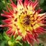 Крутая ава из категории Цветы #780
