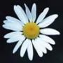 Оригинальная картинка для аватарки из категории Цветы #784