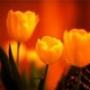 Оригинальная картинка для аватарки из категории Цветы #790