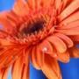 Оригинальная автрака из категории Цветы #792