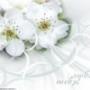 Оригинальная картинка для аватарки из категории Цветы #794