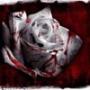 Красивая картинка для аватарки из категории Цветы #797