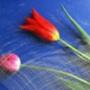 Крутая ава из категории Цветы #807