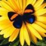 Прикольная картинка для аватарки из категории Цветы #826