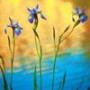 Прикольная автрака из категории Цветы #827