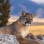 Бесплатная картинка для аватарки из категории Животные #1548