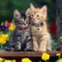 Красивая картинка для аватарки из категории Животные #1554