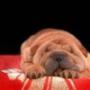 Крутая картинка для аватарки из категории Животные #1572