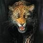 Крутая ава из категории Животные #1578