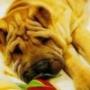 Прикольна картинка для аватарки из категории Тварини #1579