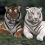 Безкоштовна картинка для аватарки из категории Тварини #1593