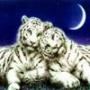 Бесплатная ава из категории Животные #1608