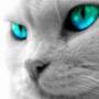Прикольная картинка для аватарки из категории Животные #1617