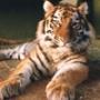 Красивая картинка для аватарки из категории Животные #1623