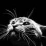 Оригинальная ава из категории Животные #1635