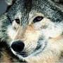Красивая картинка для аватарки из категории Животные #1642