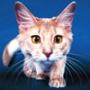 Оригинальная ава из категории Животные #1648