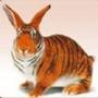 Прикольная ава из категории Животные #1649