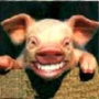 Гарна картинка для аватарки из категории Тварини #1659