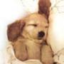Бесплатная картинка для аватарки из категории Животные #1684
