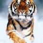 Бесплатная ава из категории Животные #1687