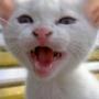 Красивая картинка для аватарки из категории Животные #1691